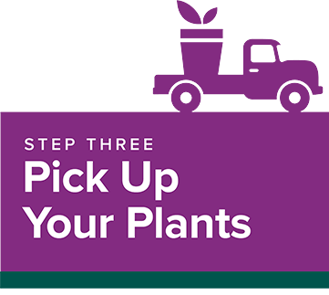 Step 3: Pick up your plants