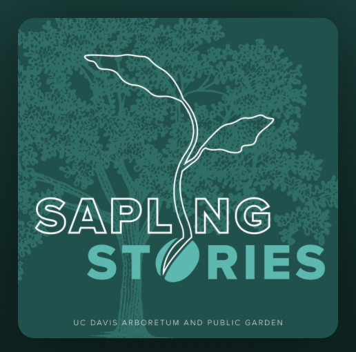 Image of Sapling Stories podcast logo.