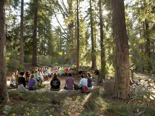 Image of a class in the T. Elliot Weier Redwood Grove.