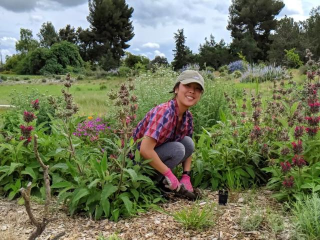 Person smiling at camera while kneeling among flowering plants in the California Native Plant Meadow