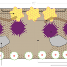Image of pollinator planting plan design.