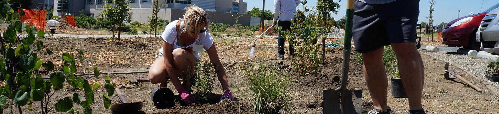 uc davis students participating in the sustainable horticulture internship